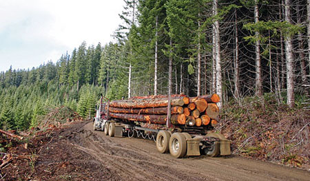 Western Forestry and Conservation Association: Logging Truck in Forest