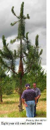 Willamette Valley Ponderosa Pine Conservation Association ...